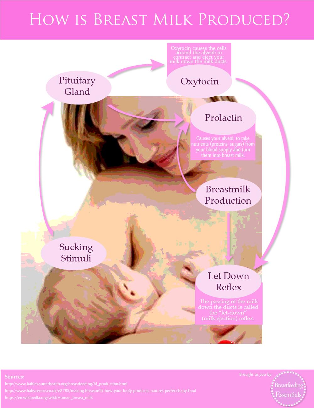 Prolactin Breast Milk 22